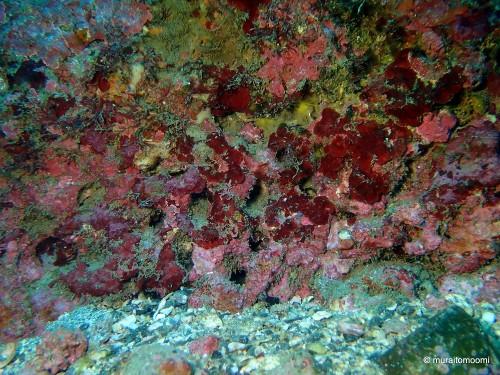 こんな感じの岩。小さな穴や窪みがたくさんあります