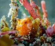 次の記事: 【速報】伊豆の黄金崎ビーチに激レア生物「カエルアンコウモドキ