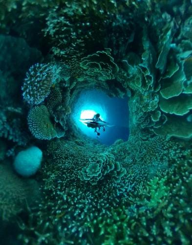 気持ち的にはこんな感じ。サンゴに囲まれてるー!