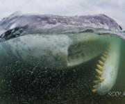 前の記事: 【ニュース】鹿児島県南さつまにマッコウクジラが打ち上がる