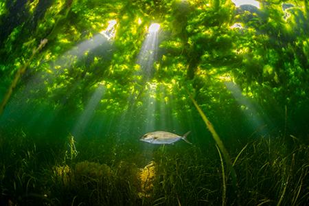 繁茂するシオミドロに木漏れ日が差し込む(撮影=松田康司)