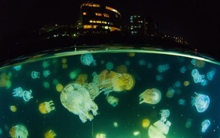 増殖したタコクラゲと鹿児島の街を絡めたナイトの半水面(撮影=松田康司)
