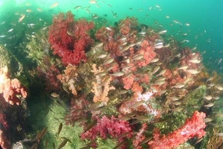 水深5mには、ソフトコーラルの群生地が広がる