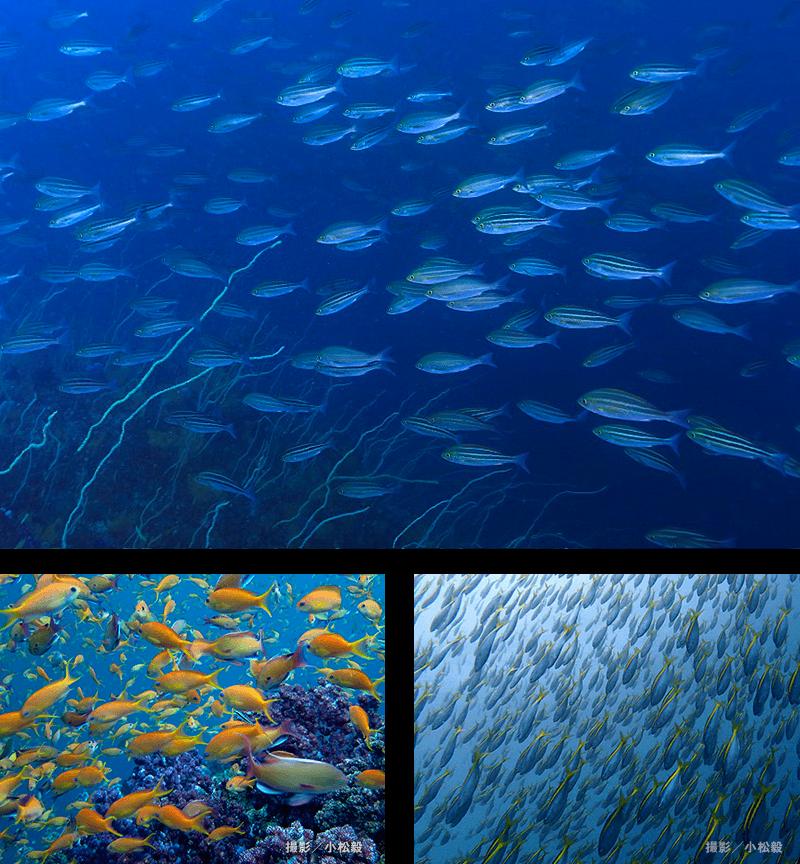 魚群が湧き出る大パノラマ「サク根」