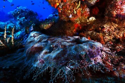 岩陰で休んでいるウォビゴンシャーク。ここでは人間も水中の一部かのように生物たちの生活に溶け込むことができた