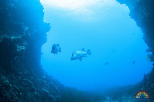 【「Dive in Japan!」vol.01:千葉県】ヒゲダイ君の待つ西川名でワイド&マクロに大興奮!(1/39)