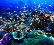 """次の記事: """"奇跡の海""""に潜るということ~インドネシアの秘境・ラジャアン"""