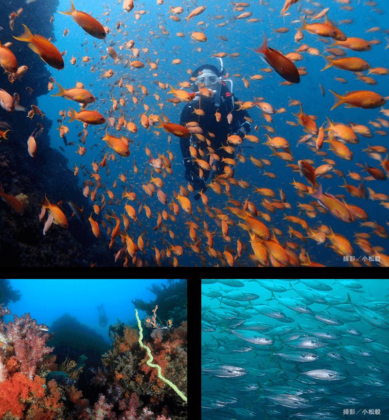 ブルーの海中にカラフルな風景を見つける