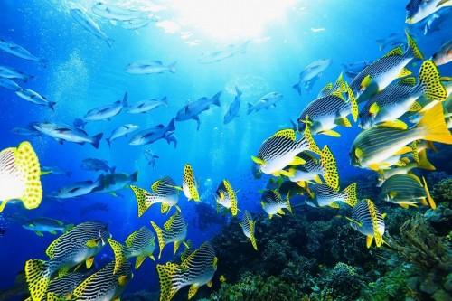 濃いプランクトンのせいだろう、そこには様々な種の魚たちが群れを成して押し寄せた