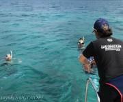 次の記事: スキンダイビングの現状と課題、そして未来へ〜石垣島シュノーケ