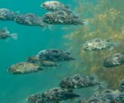 前の記事: ダイビング中にハリセンボンが大量発生⁉かわいいサクラダンゴウ