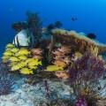 ボトムの深い所にはアカククリやヨスジフエダイ、アヤメエビスの仲間が一つの群れとなっていた