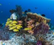 """次の記事: インドネシアの""""奇跡の海""""ラジャアンパットを潜る!【1】リゾ"""