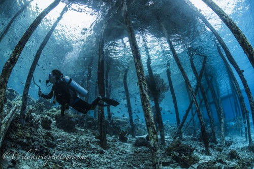 桟橋の下はまるでプールの様な透き通った美しい光景が広がっていた