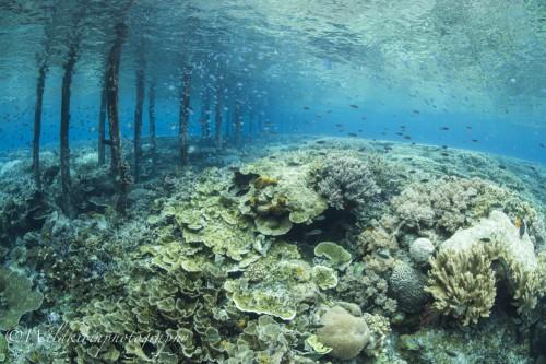 桟橋の横ではシュノーケルもできるのだが足の踏み場もないくらいのサンゴで埋め尽くされているので注意が必要だ