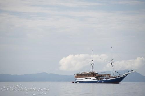 ラジャアンパットではよく見られるクルーズ船、多くの船はソロンから出港している
