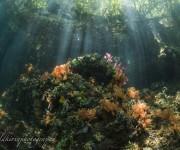 """前の記事: インドネシアの""""奇跡の海""""ラジャアンパットを潜る!【2】地球"""