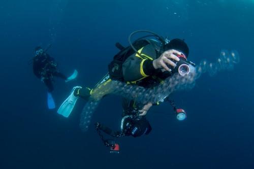 オオサルパと浮遊生物を撮影するダイバー(撮影/堀口和重)