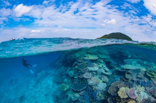 伊平屋島で1番印象に残った沖縄本来のありのままのサンゴの群生