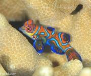 前の記事: 奄美大島が北限の魚を探せ!…なのに、マンタ・イルカ・ハンマー