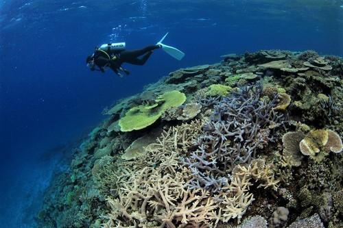 開拓ダイビングのきれいなサンゴ(撮影/石川肇)