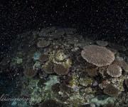 前の記事: <注目ニュース>石垣島・伊原間(いばるま)沖の海域で、サンゴ