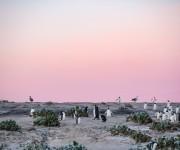 前の記事: 写真集『Penguin Being -今日もペンギン-』(7