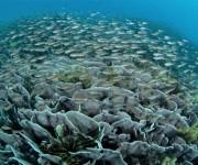 前の記事: サンゴ礁に温帯と亜熱帯が入り乱れる、不思議な光景に感動!さま