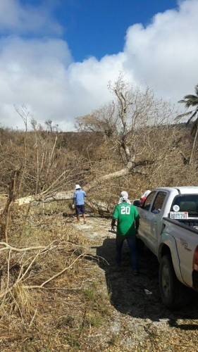 台風直後。木がなぎ倒され、道が塞がれていた