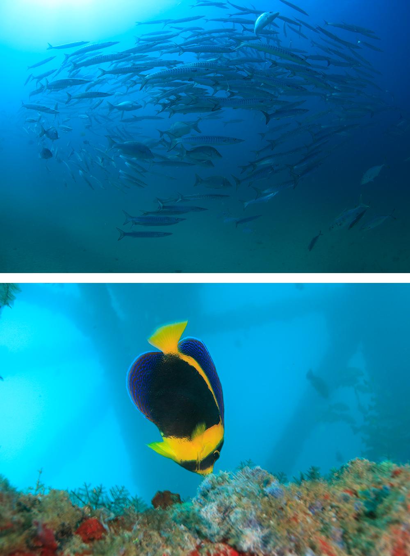 高密度で迫る魚群と交錯する桟橋の躯体