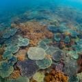 サンゴとソフトコーラルの光景がひたすら続く(堀口和重)