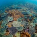サンゴとソフトコーラルの光景がひたすら続く