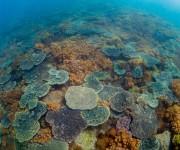 次の記事: 愛南でダイビング!複雑な海岸が育む生態系やサンゴ礁…そのポテ