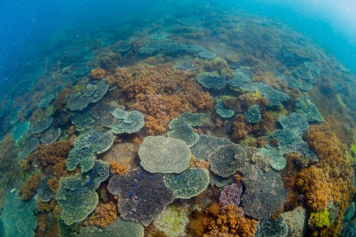 サンゴとソフトコーラルの光景がひたすら続く(撮影/堀口和重)