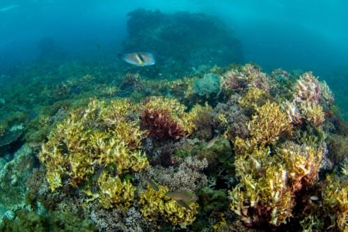 浅場は海藻が美しく揺らぐ(撮影/堀口和重)