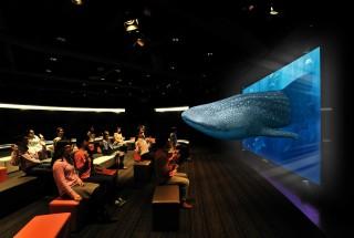 上映プログラム1▶︎3D Sony Aquarium 黒潮の海の生き物たち(約9分)