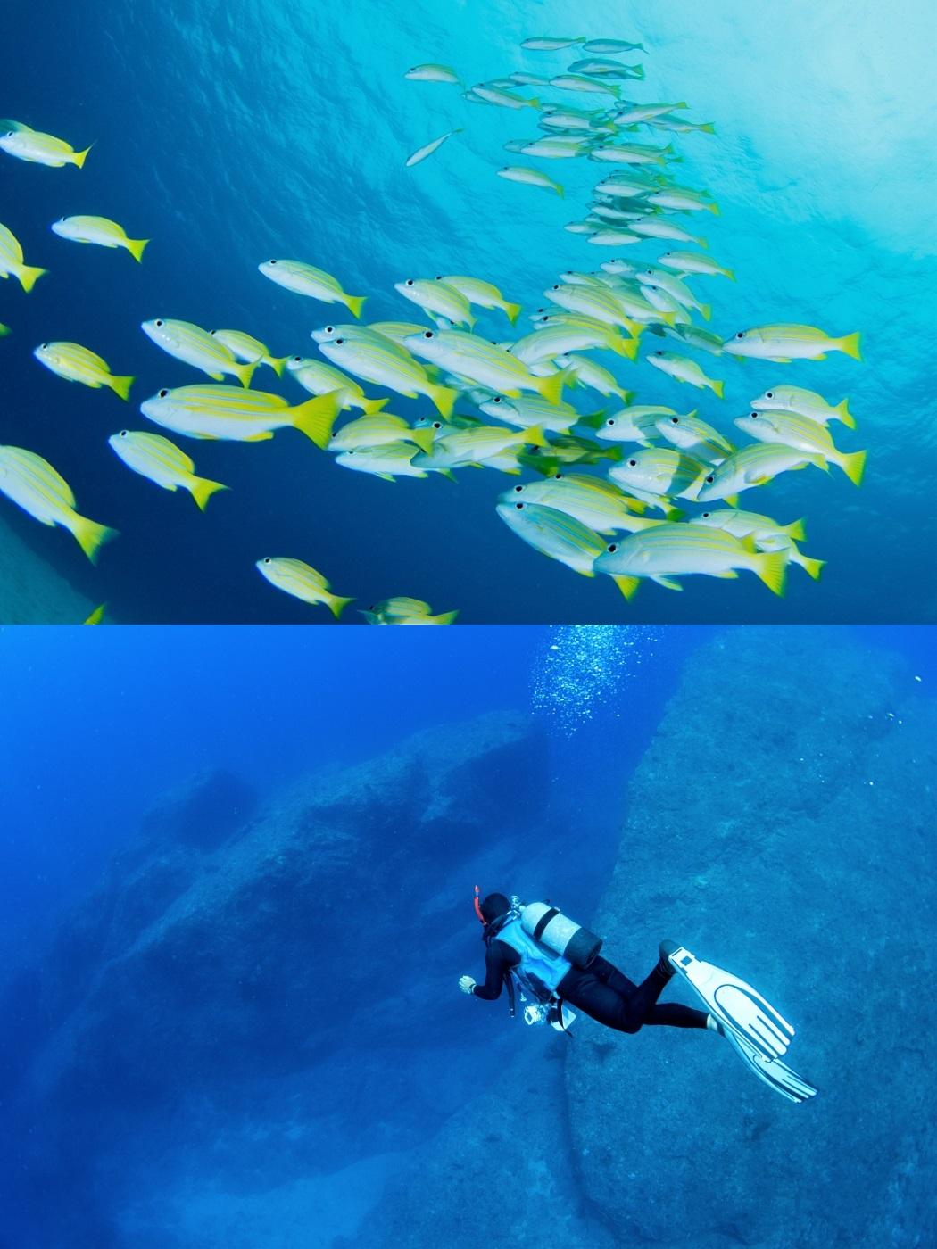湾内と外洋で異なる色を魅せる奄美ブルーの海