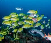 前の記事: 「日本の海」水中フォトコンテスト2019が開催。あなたの水中