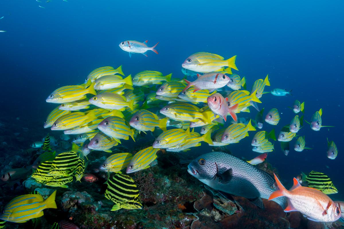 「日本の海」水中フォトコンテスト2019入賞作品発表。審査員の中村宏治さん、堀口和重さんから熱い総評も届きました!