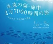 次の記事: 中村征夫・中村卓哉写真展「永遠の海・海中 2万7000時間の