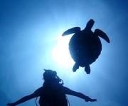 次の記事: 2泊3日グアムダイビング!癒しの海と絶景、アクティビティでリ