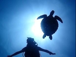 2泊3日グアムダイビング!癒しの海と絶景、アクティビティでリフレッシュ!