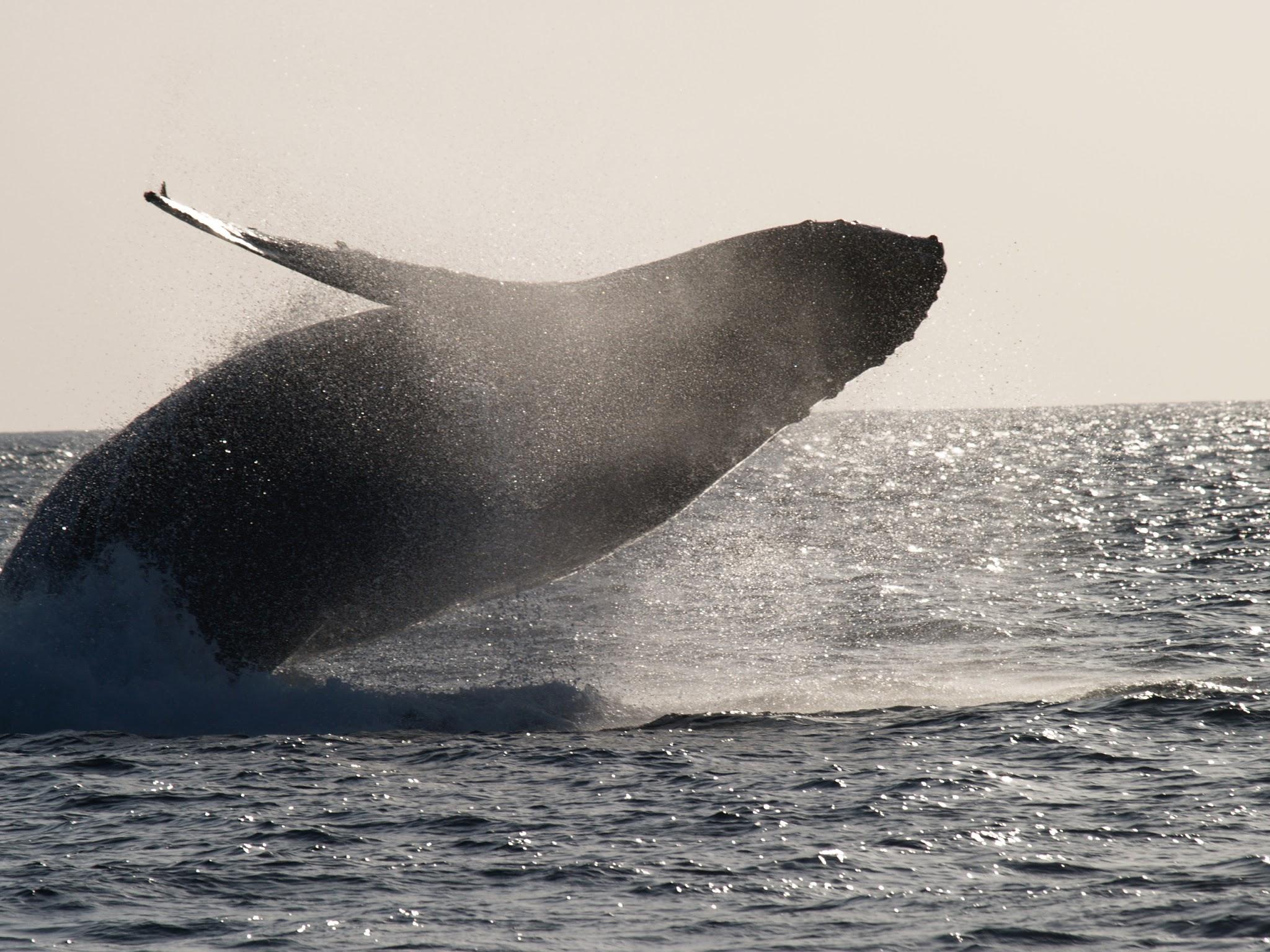 """""""生物写真撮影""""の趣味をこじらせて、ダイビングをはじめました〜クジラに誘われダイバーに。ついに奄美大島移住!〜"""