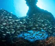 前の記事: 八丈島でワイドにダイビング!ナズマド、八重根、底土、イデサリ