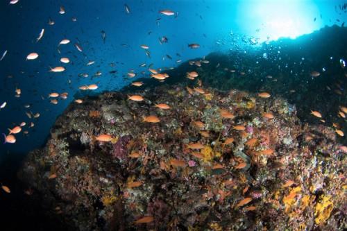 ブルーの海とキンギョハナダイの群れ(撮影/堀口和重)
