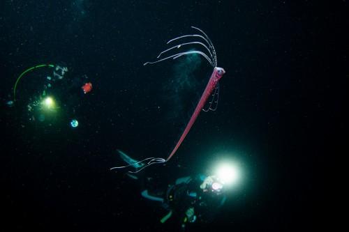 海洋プラ、地球温暖化の現実