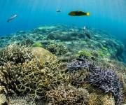 前の記事: 水納島&瀬底島でダイビング!沖縄本島・本部から潜りに行ける離