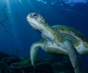 前の記事: 競技性が魅力の水中写真選手権大会。3回目のチャレンジでついに