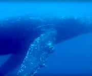 前の記事: 串本の潮が帰ってきたぞ〜! マンタにザトウクジラに大物ざんま