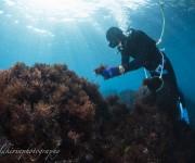 前の記事: 伊豆大島のテングサ漁に密着!昔ながらのフーカー潜水、ベテラン
